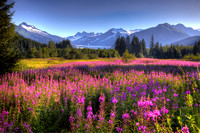 Fireweed and Ice